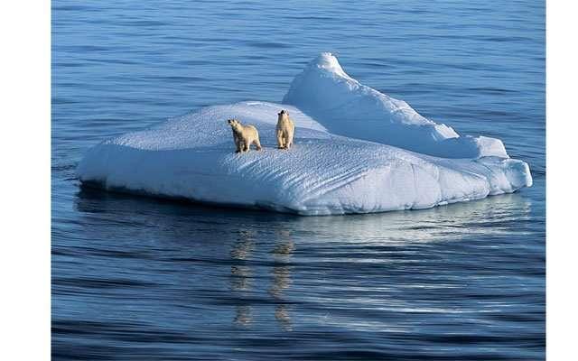 Жизнь на Северном и Южном полюсе