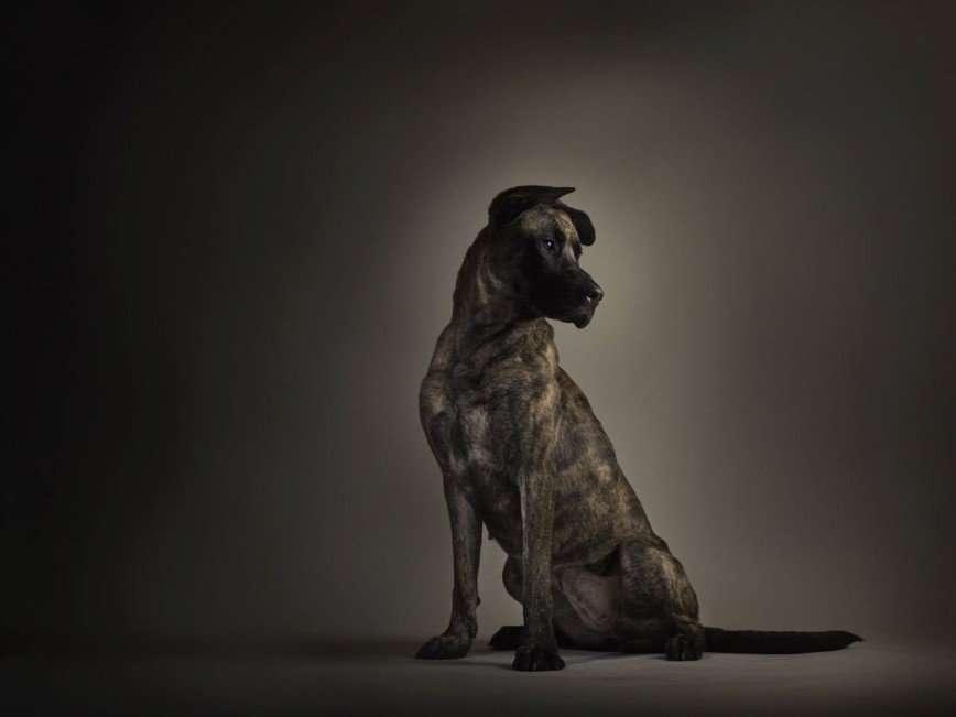Эндрю МакГиббон - повелитель животных