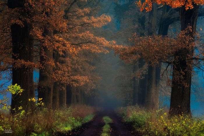 Волшебный мир Карпат