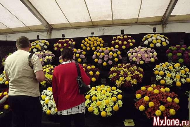 Весняний фестиваль квітів Малверн