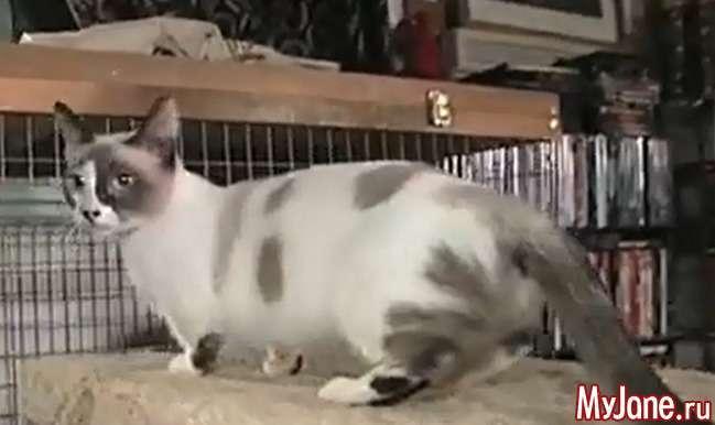 Про котів і книзі рекордів Гіннеса