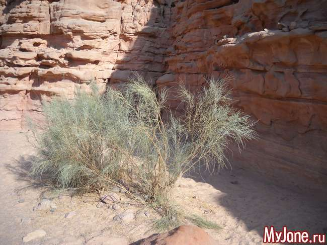 Кольоровий каньйон - чудове творіння природи