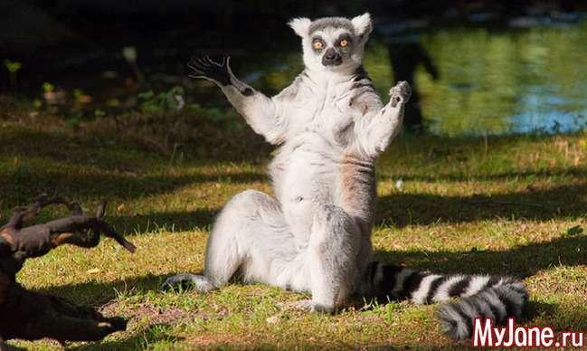 Котячий лемур – абориген Мадагаскару