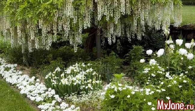 Монохромний квітник: скромне плаття Попелюшки або вишуканий наряд аристократки?