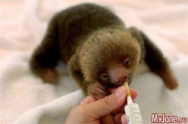 Лінивці: шлях довжиною в мільйони років