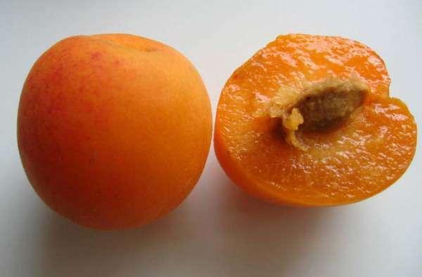 Сливові абрикоси, сливи абрикосові