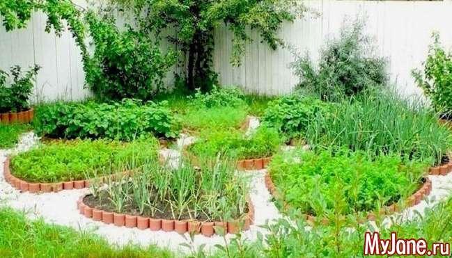Овочеві клумби: тільки декоративний город або дизайнерське оформлення ділянки?