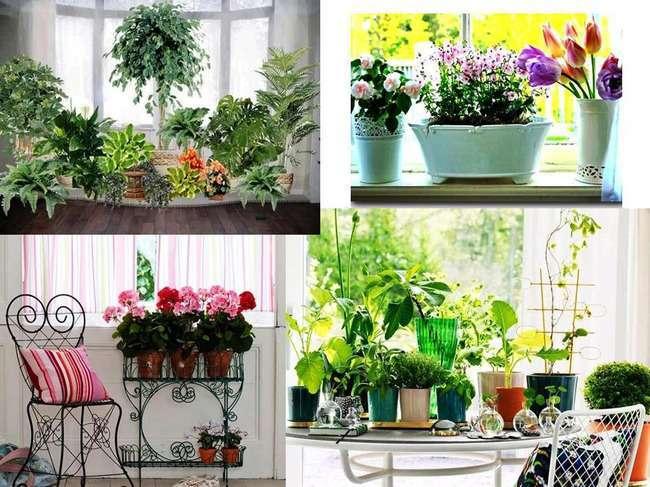 Домашня оранжерея, як її красиво оформити